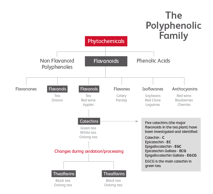 The Polyphenolic Family Infographic