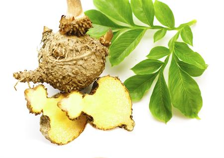 how to use konjac powder to lose weight