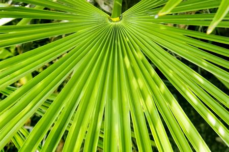 Saw Palmetto can help an enlarged prostate
